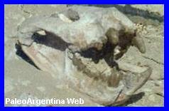 http://www.grupopaleo.com.ar/paleoargentina/BrynGwyn01.jpg