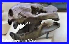 http://www.grupopaleo.com.ar/paleoargentina/barhyaena2.JPG