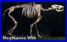 http://www.grupopaleo.com.ar/paleoargentina/megafauna/Percrocuta2.jpg