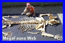 http://www.grupopaleo.com.ar/paleoargentina/megafauna/Ursus_spelaeus3.jpg